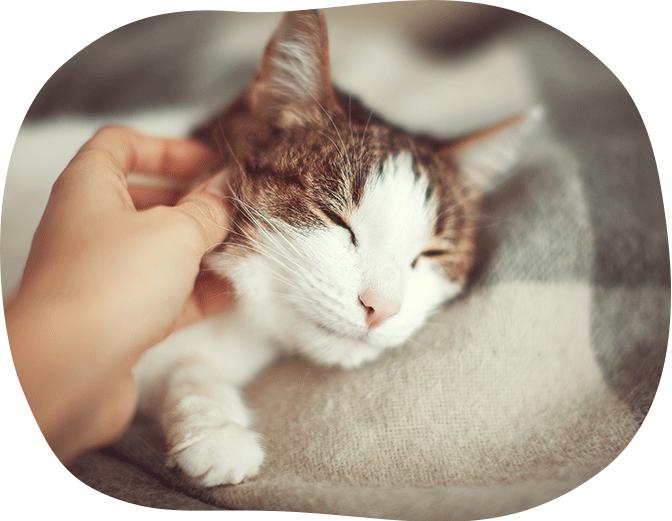 猫セミナー