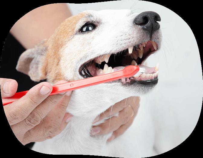 歯磨きセミナー