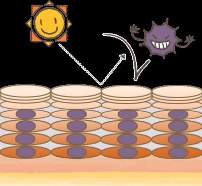 皮膚の働きイメージ